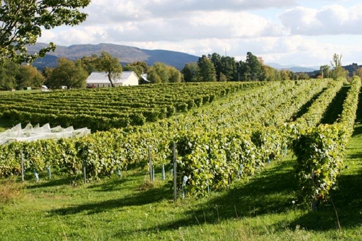 vignoble Domaine Bresee – œnotourisme domaines viticoles des Cantons de l'Est