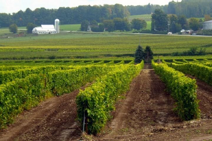 Vignoble de l'Orpailleur ,Visite vignoble, Vignoble ,domaines viticoles ,Dunham ,Estrie ,Cantons de l'Est ,Vignoble ,Meilleurs restaurants ,hebergement ,a proximite