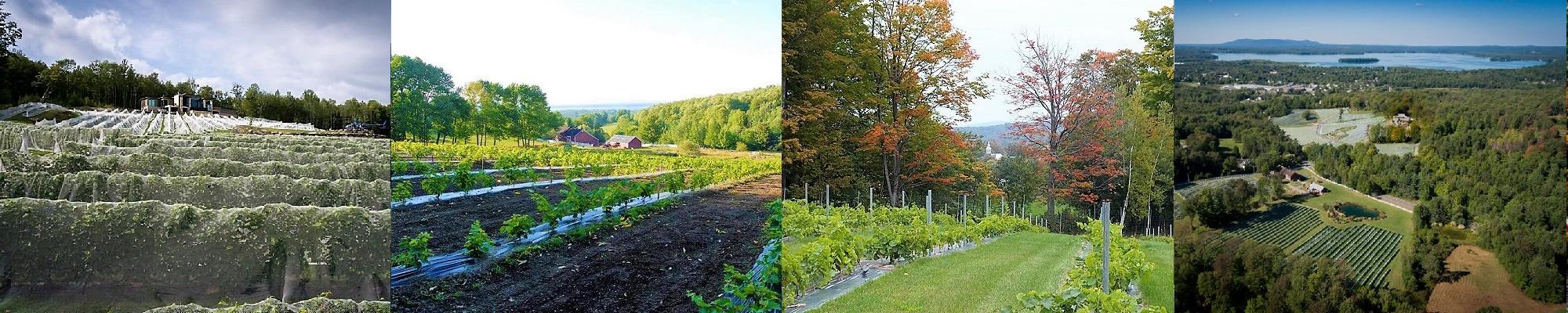 Oenotourisme ,vindici ,vignoble du Ruisseau ,Sud du Québec ,visite de vignoble ,