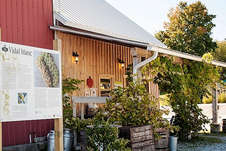 Vignoble Val Caudalies tourisme du vin – zone viticole Dunham – St-Armand Cantons de l'Est