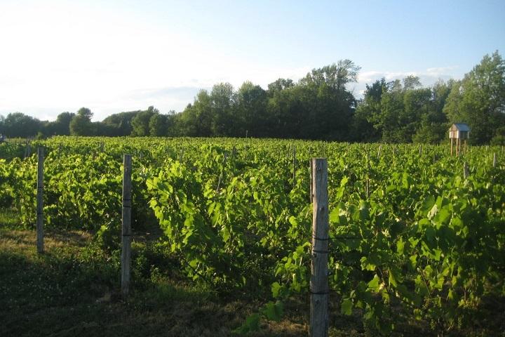 Vignoble aux Volets Noirs ,Montérégie ,Sud du Québec ,tourisme du vin ,sélection Vindici ,
