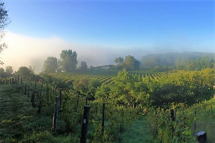 Domaine du Nival ,Montérégie ,Sud du Québec ,oenotourisme ,tourisme du vin ,sélection Vindici ,