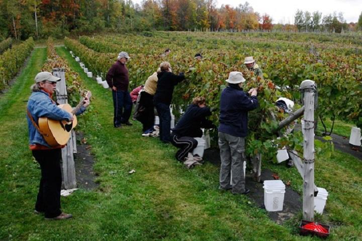 Vignoble La Halte des Pelerins tourisme du vin – zone viticole Sherbrooke - Compton Cantons de l'Est